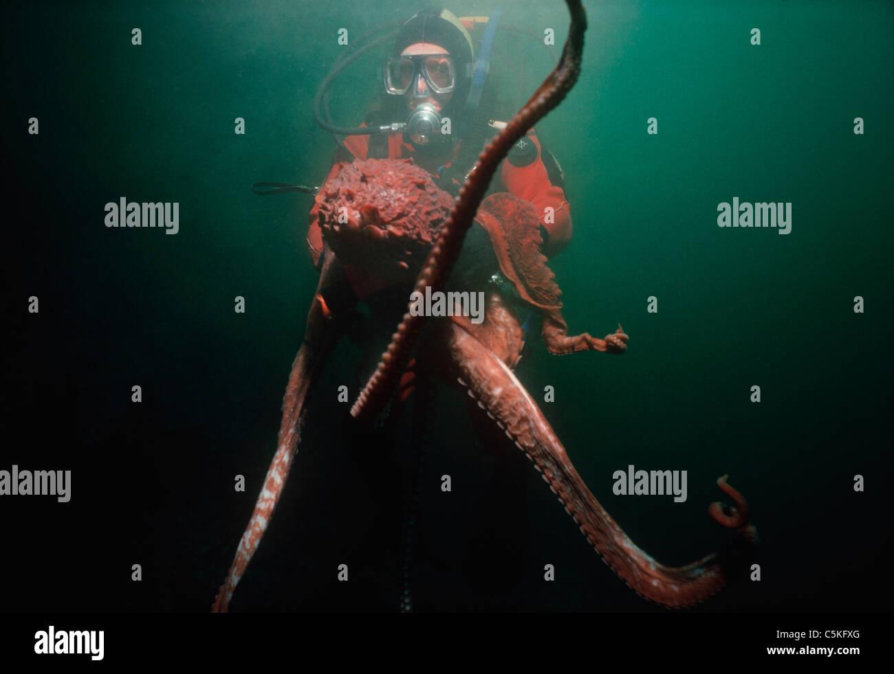 an analysis of the life of octopus dofleini Octopus punctatus gabb, 1862 espesye sa kugita nga una nga gihulagway ni wülker ni adtong 1910 ang enteroctopus dofleini [8] [14] [9]  ang enteroctopus dofleini sakop sa kahenera nga enteroctopus sa kabanay nga octopodidae.