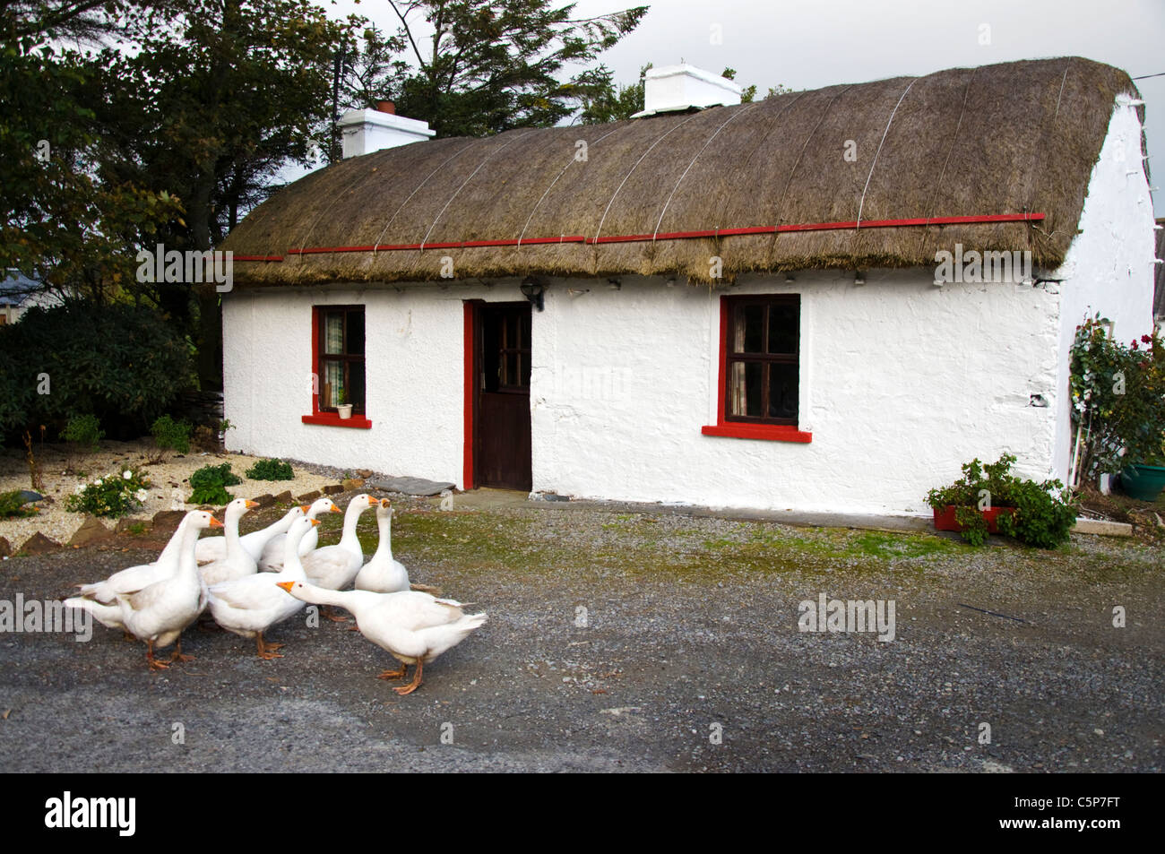 Gaggle of geese outside a traditional thatched irish for Traditional irish cottage designs