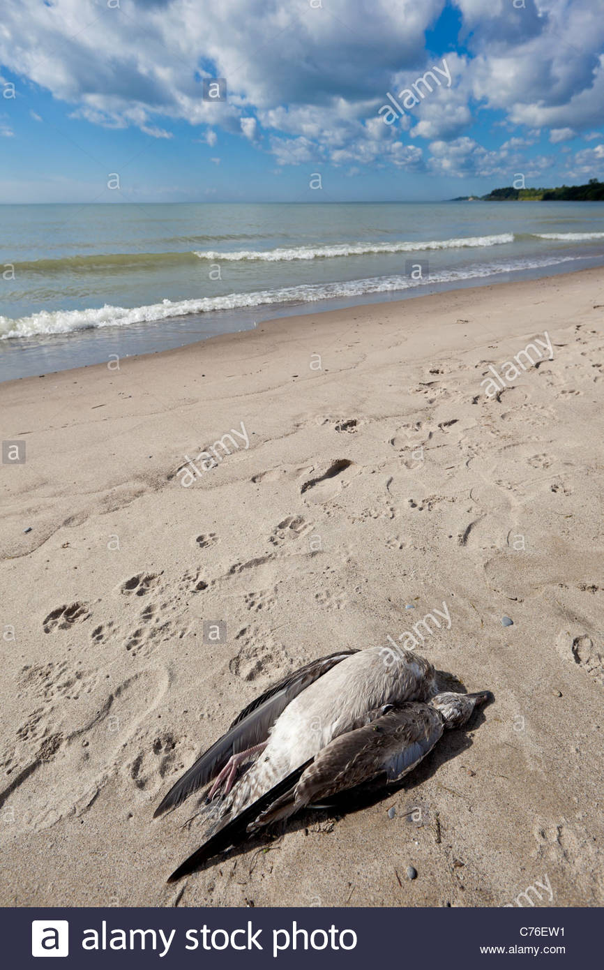rotary cove beach Cove beach, goderich: see 73 reviews, articles, and 35 photos of cove beach, ranked no5 on tripadvisor among 32 attractions in goderich.