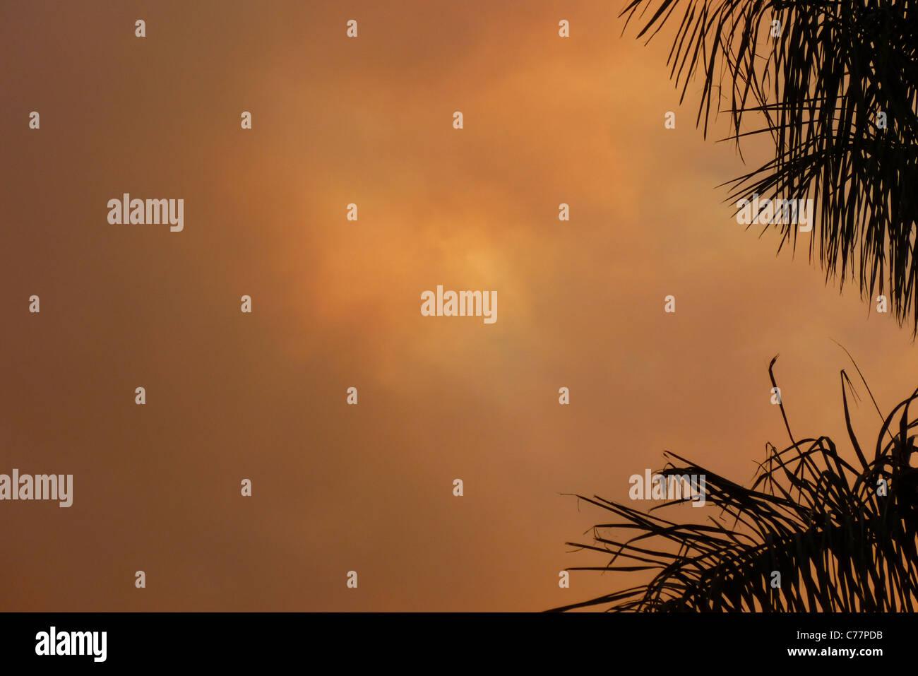 Smoke Cloud, Fire burning in the Botanic Garden, blocks the sun, Brasilia, Brazil Stock Photo