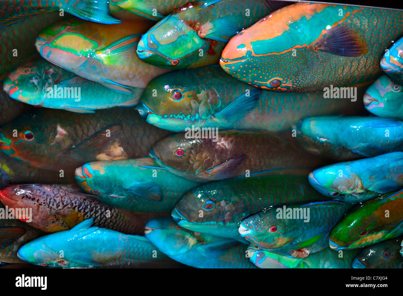 Parrotfishes for sale at local fish market pohnpei for Local fish market