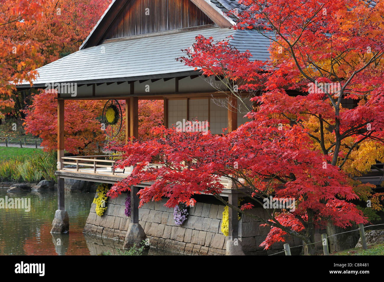 Traditional pavilion tea house in japanese garden with for Traditional japanese garden