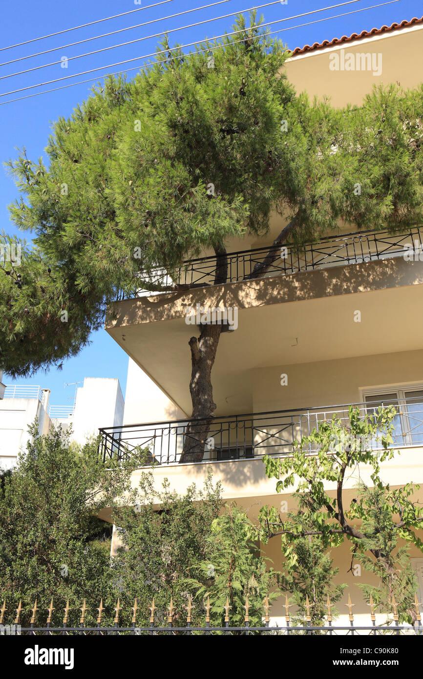 tree-growing-through-a-balcony-in-an-apa
