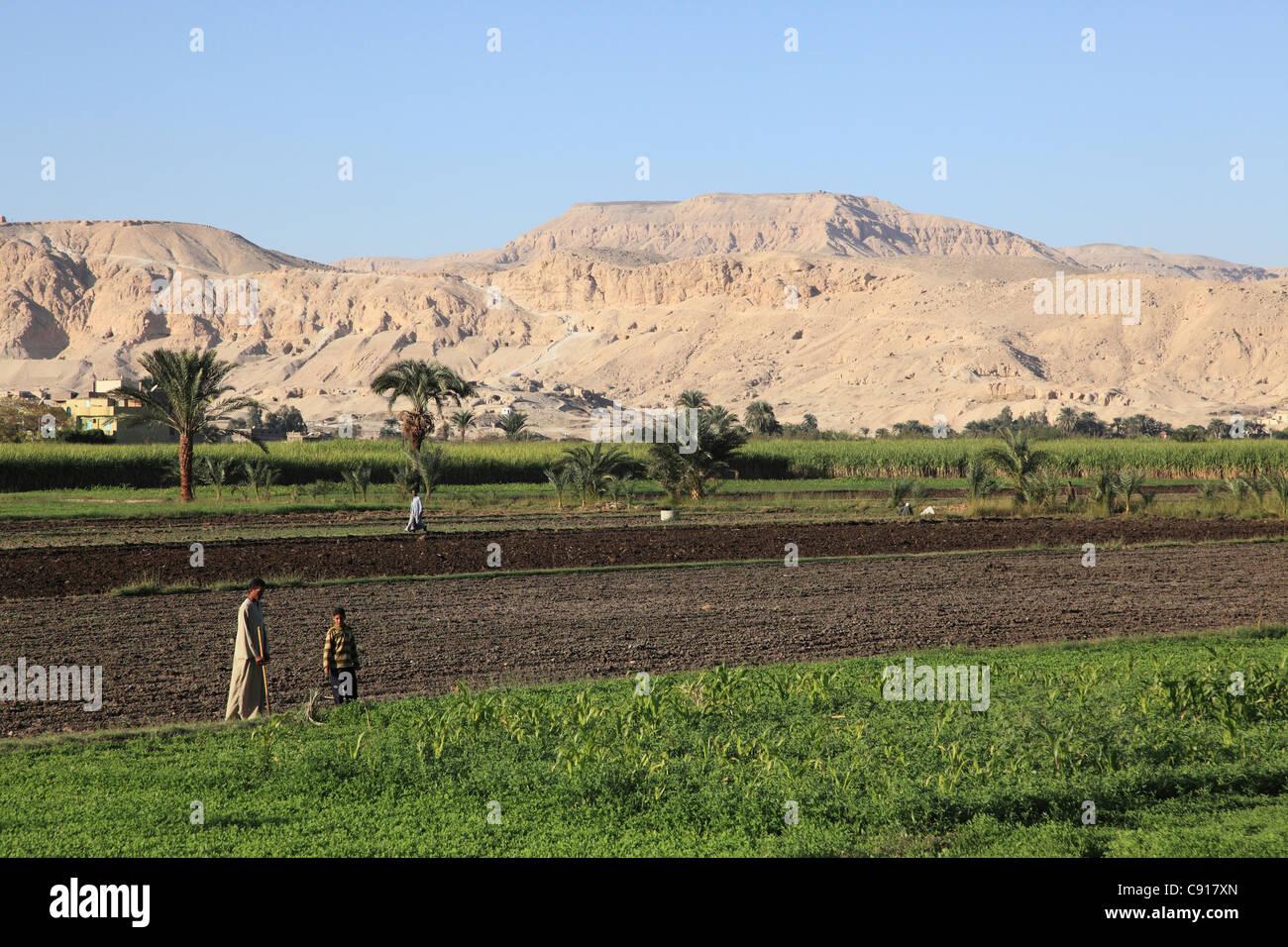 fertile land - photo #49