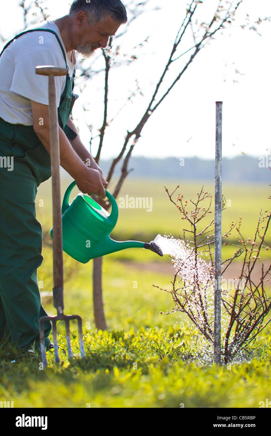 Senior man watering his garden/orchard Stock Foto