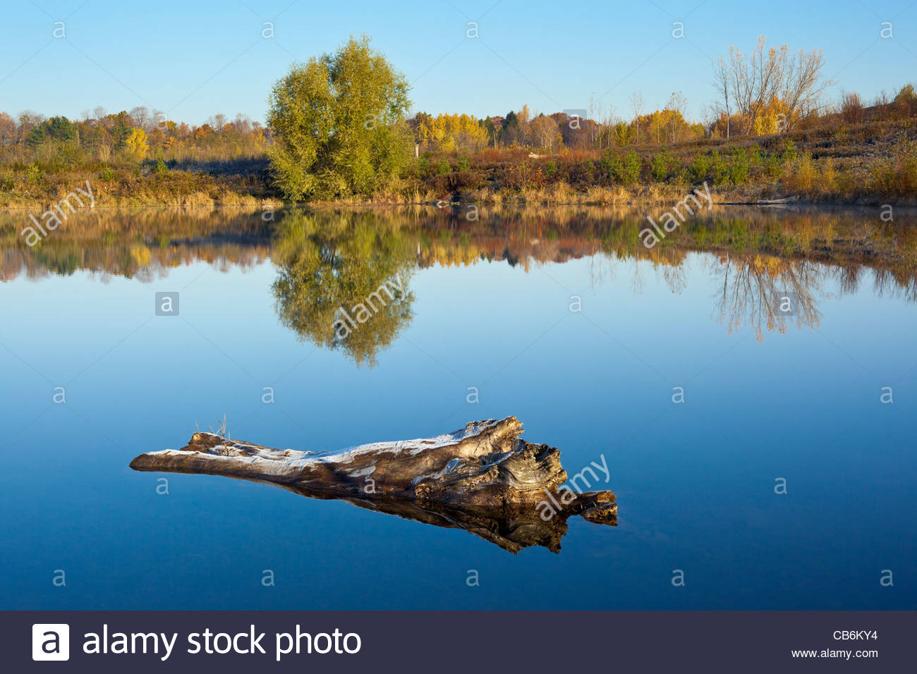 partially-submerged-log-in-the-autumn-in