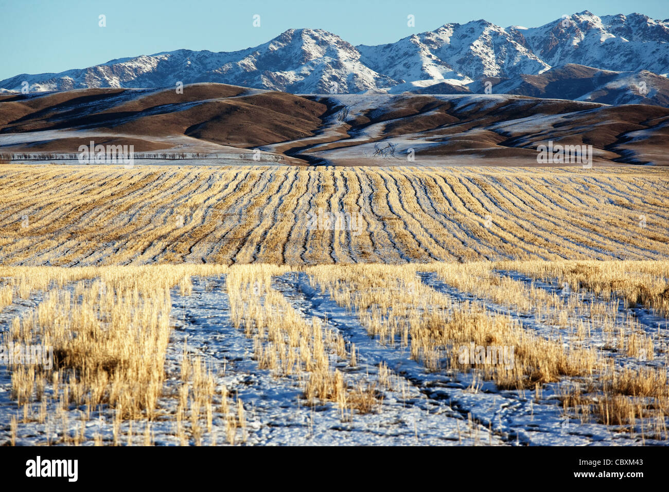 First snow on the fields and mountains Stock Foto