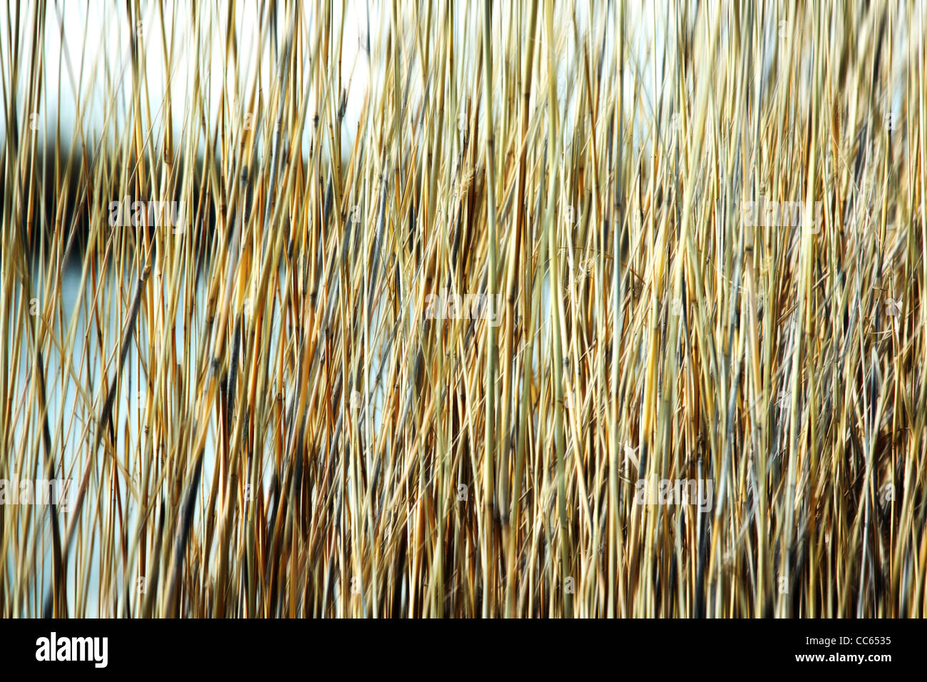 Blured reed background. Stock Foto