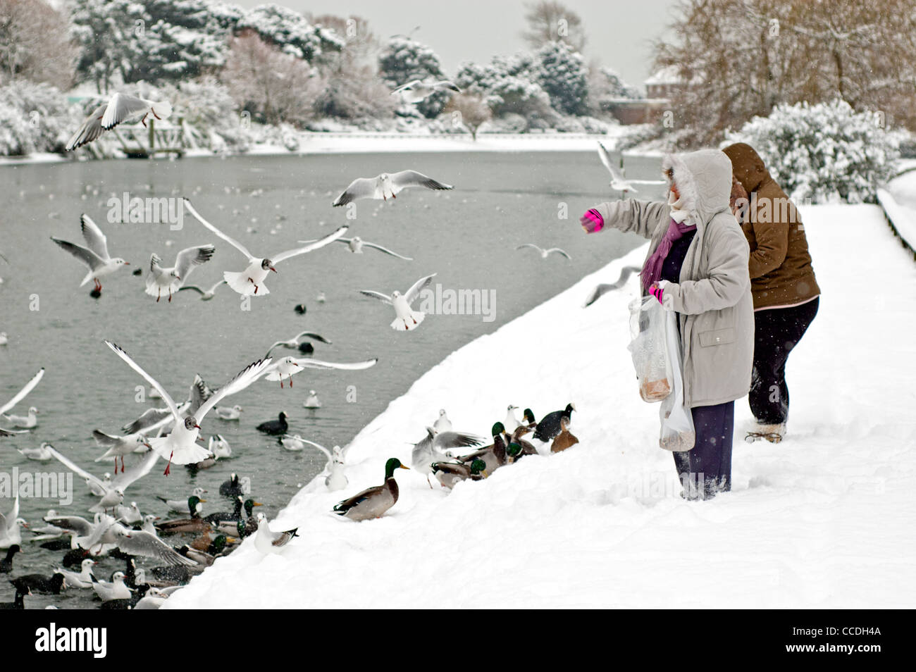people-feeding-birds-and-ducks-on-an-icy-lake-after-some-snow-in-the-CCDH4A.jpg