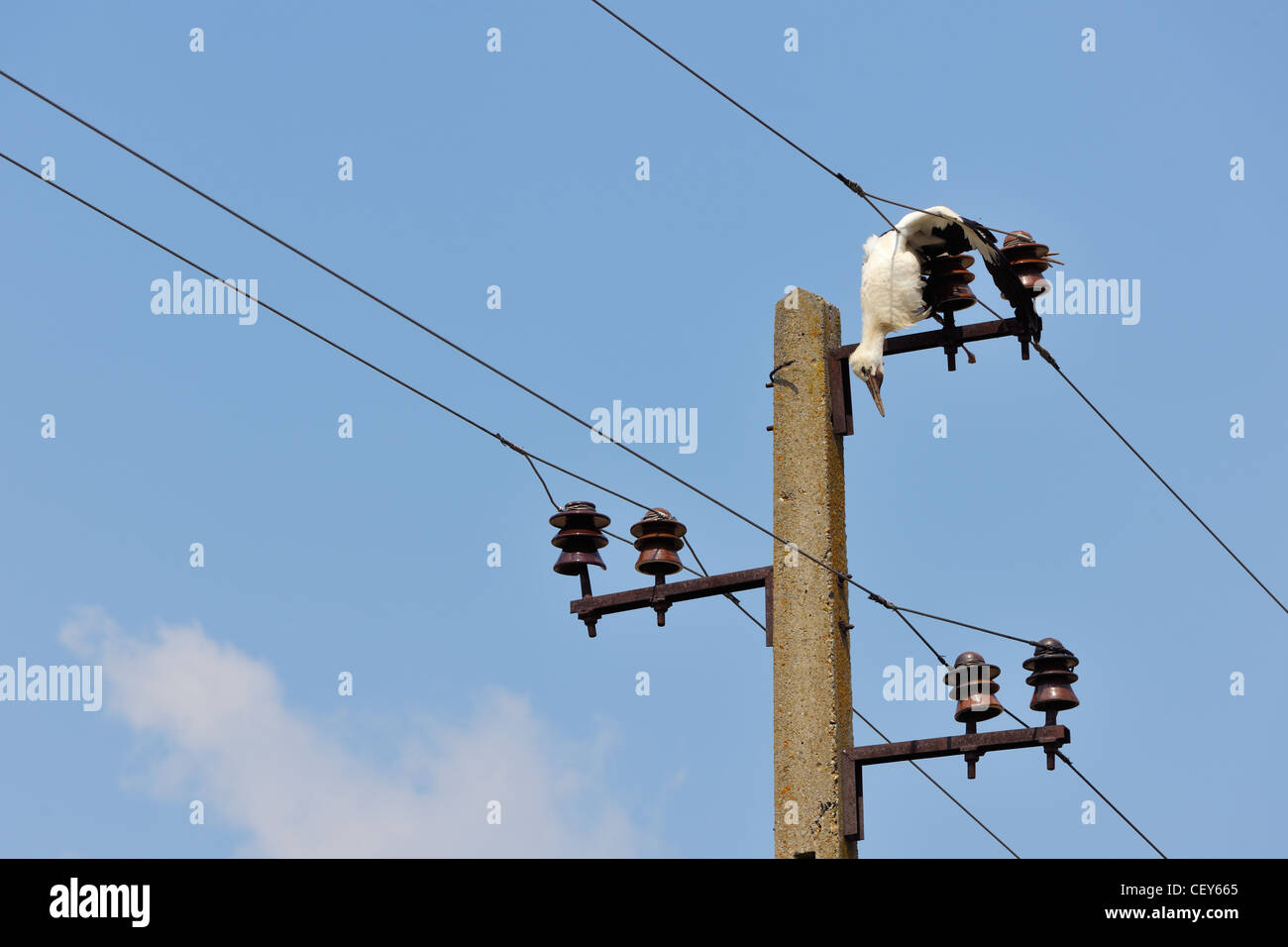 Man On High Voltage Wire : Dead bird on high voltage electricity wires killed young