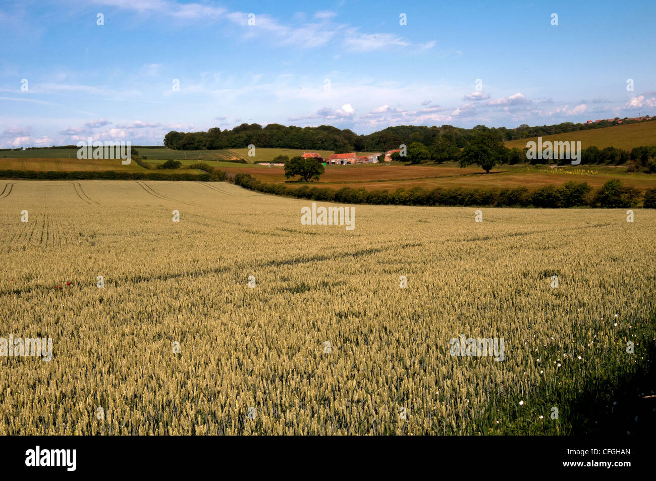Crop sprites English-countrside-corn-fields-and-farm-on-a-lovely-day-CFGHAN