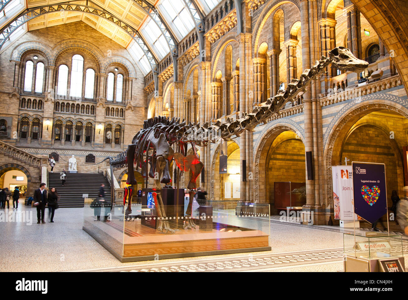 Foyer Museum Zoo : A dinosaur exhibit inside the main foyer of natural