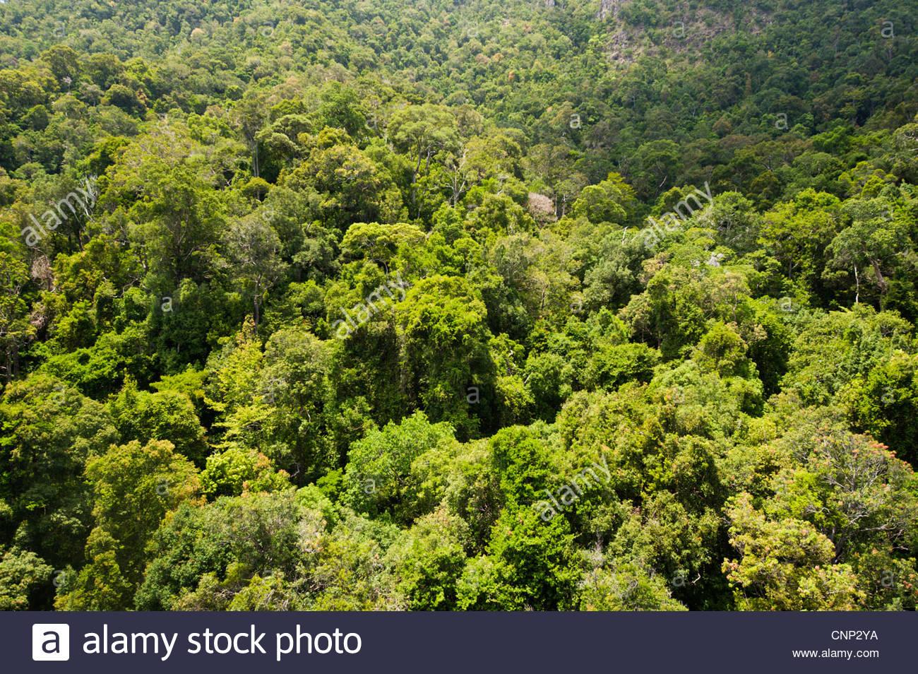 Rainforest, Langkawi, Malaysia Stock Foto