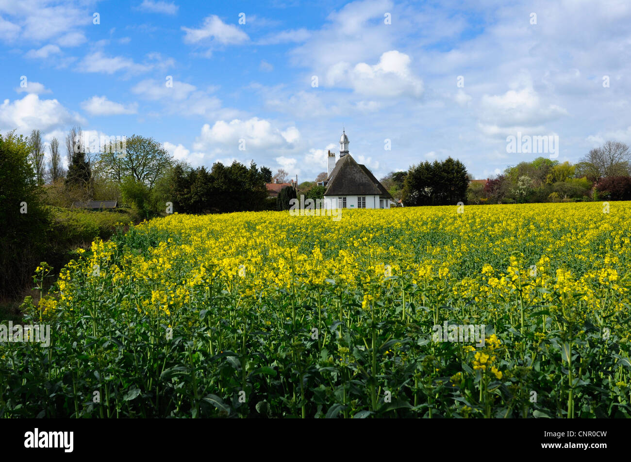 an-oil-seed-rape-field-on-the-outskirts-