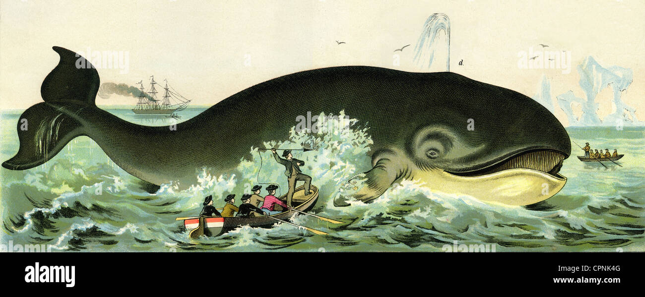 illegal commercial whaling International opinion on commercial whaling conclusion download a a nasty business – why commercial whaling must end illegal consignments.