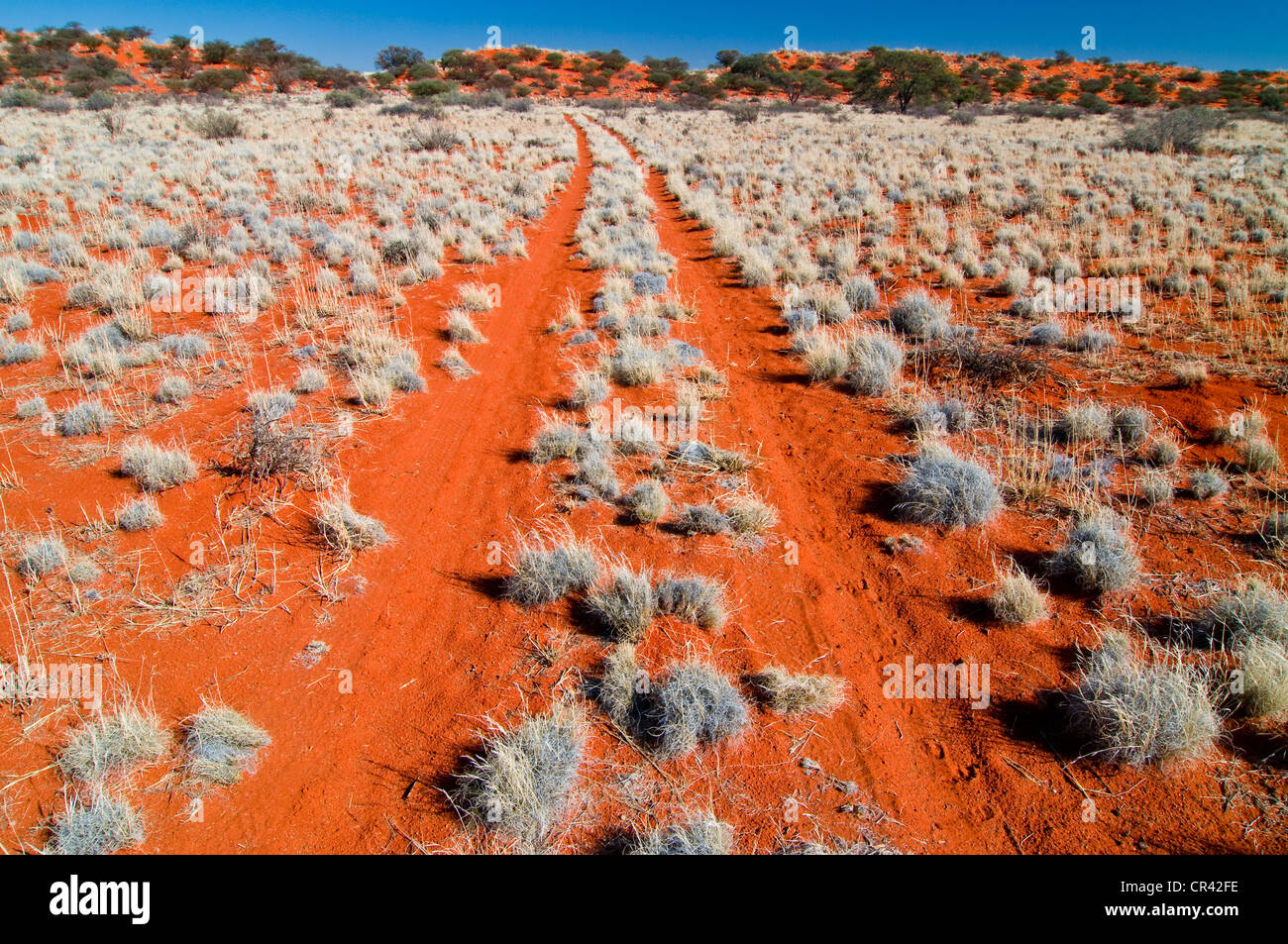 Red sand dune kalahari desert northern cape south for Outdoor photo south africa