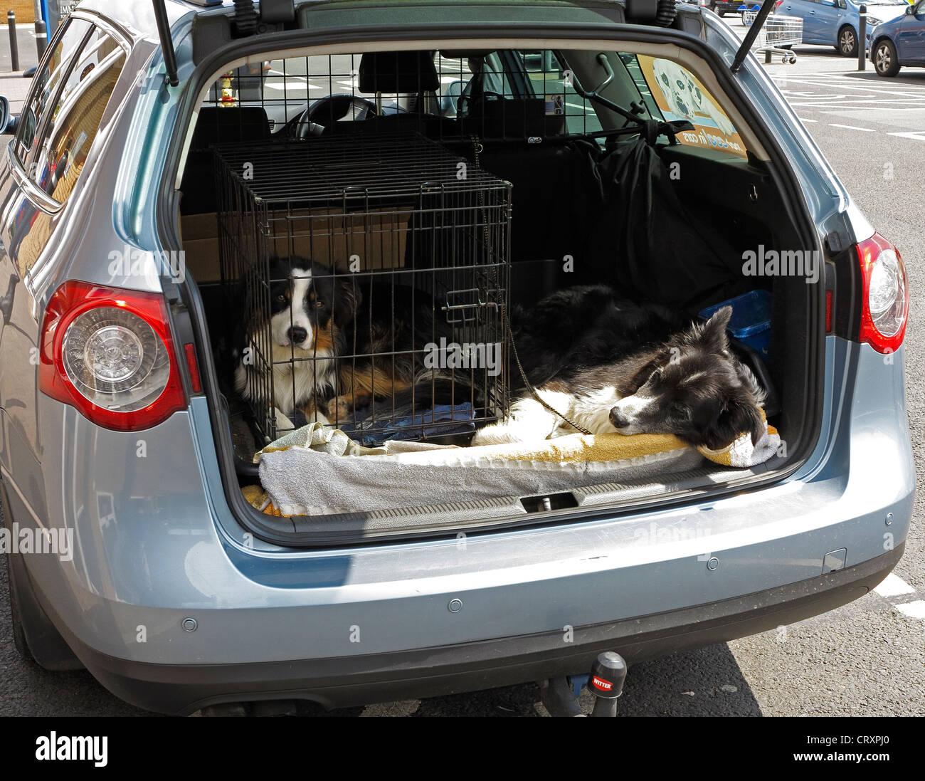 two-dogs-in-car-milton-CRXPJ0.jpg