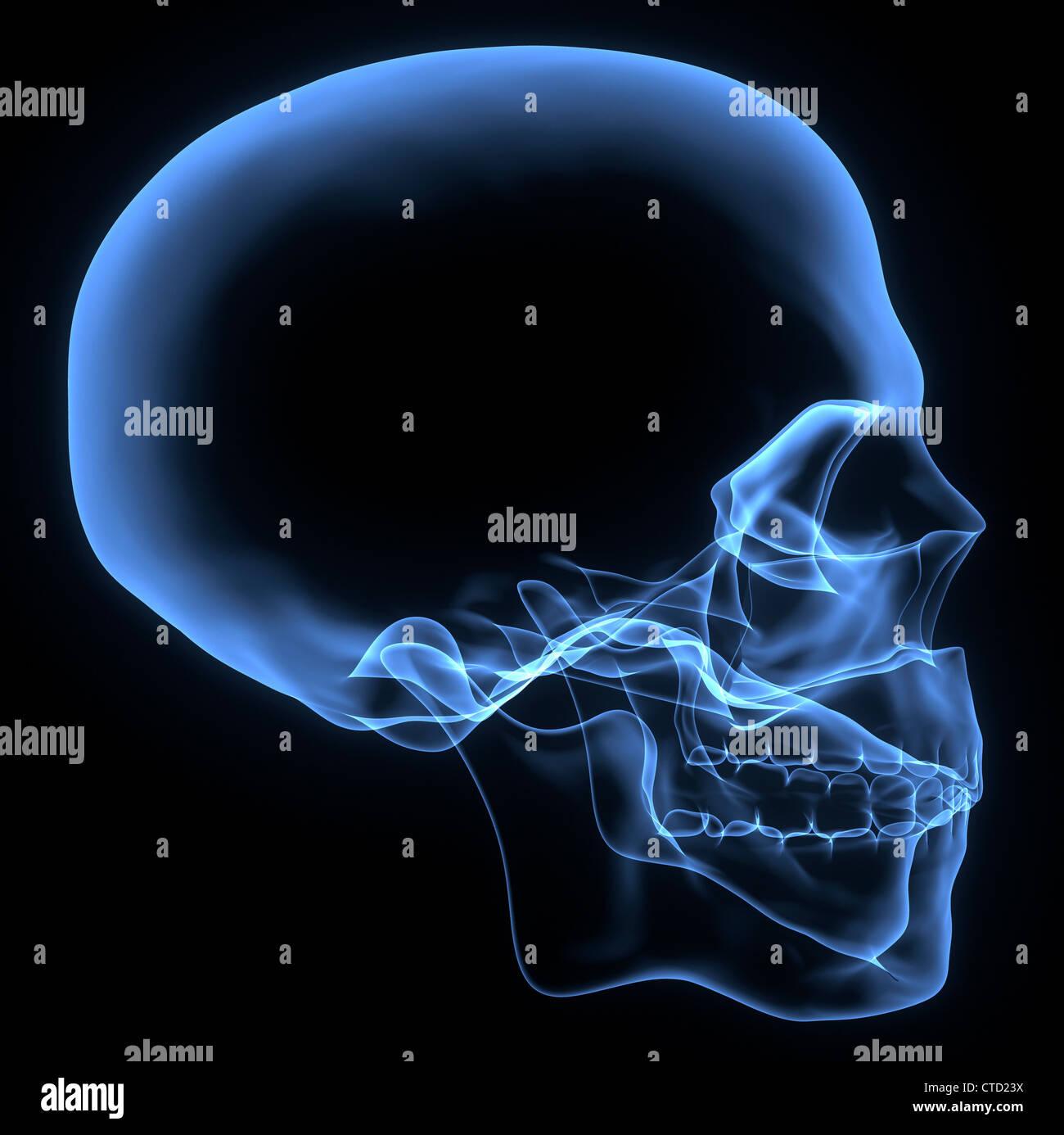 Human skull  X-ray artwork Stock Photo