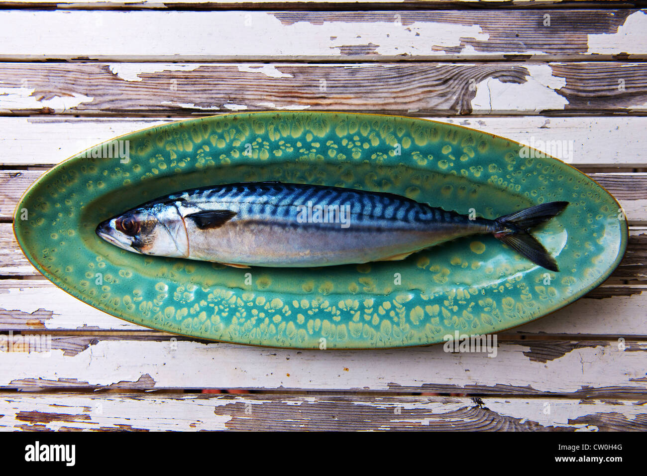 Close up of mackerel on plate Stock Foto