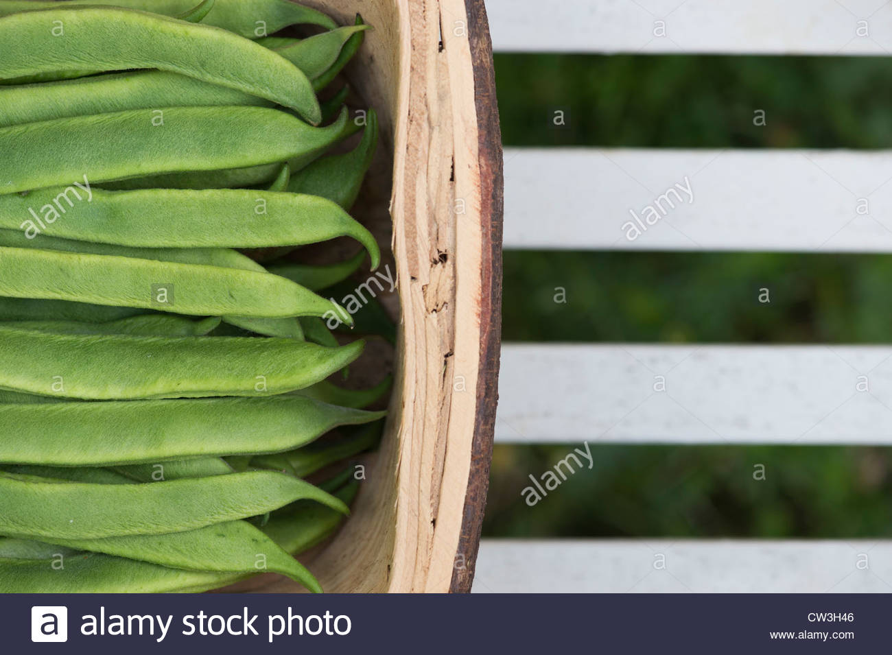 harvested scarlet emperor runner beans in a wooden basket