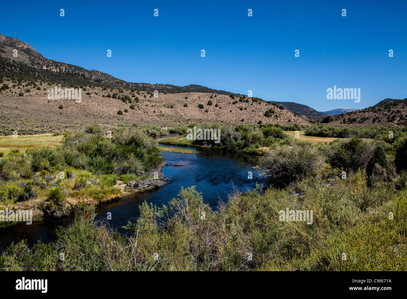 The east walker river near bridgeport california a for Walker river fishing
