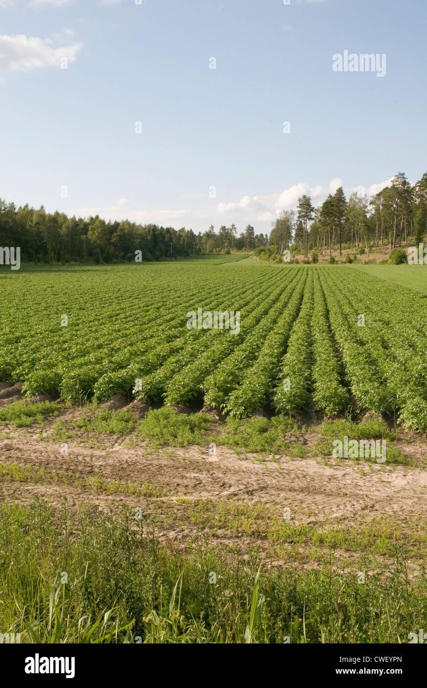 How to Grow Potatoes  Seed Savers Exchange Blog