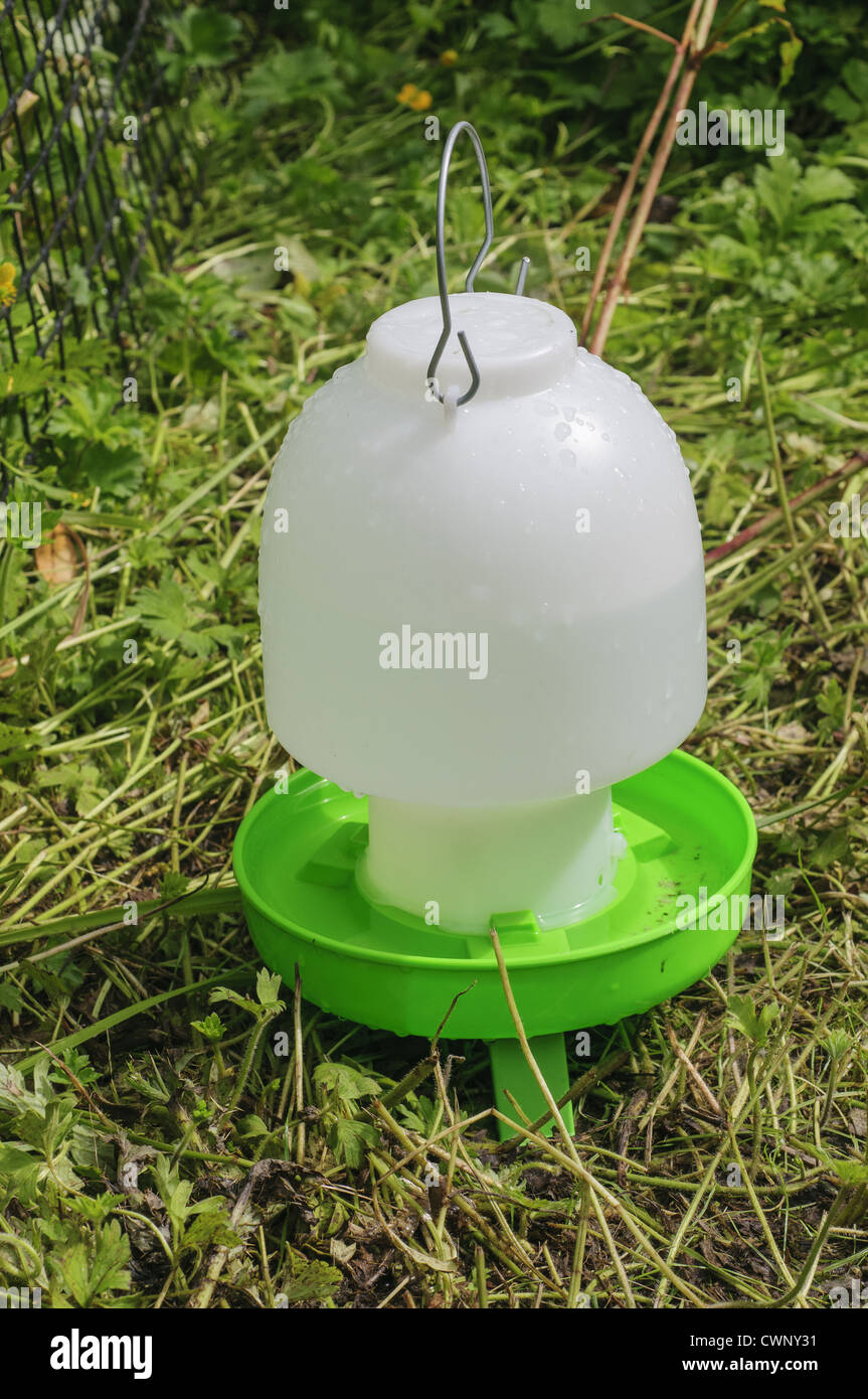 Domestic Chicken Water Dispenser For Free Range Hens In