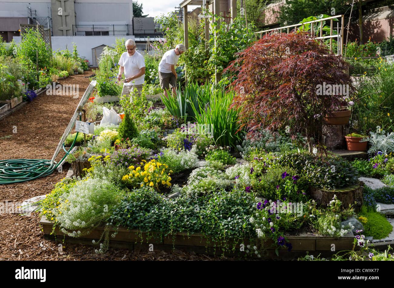 Urban garden gardening working in the community garden for Gardening tools vancouver