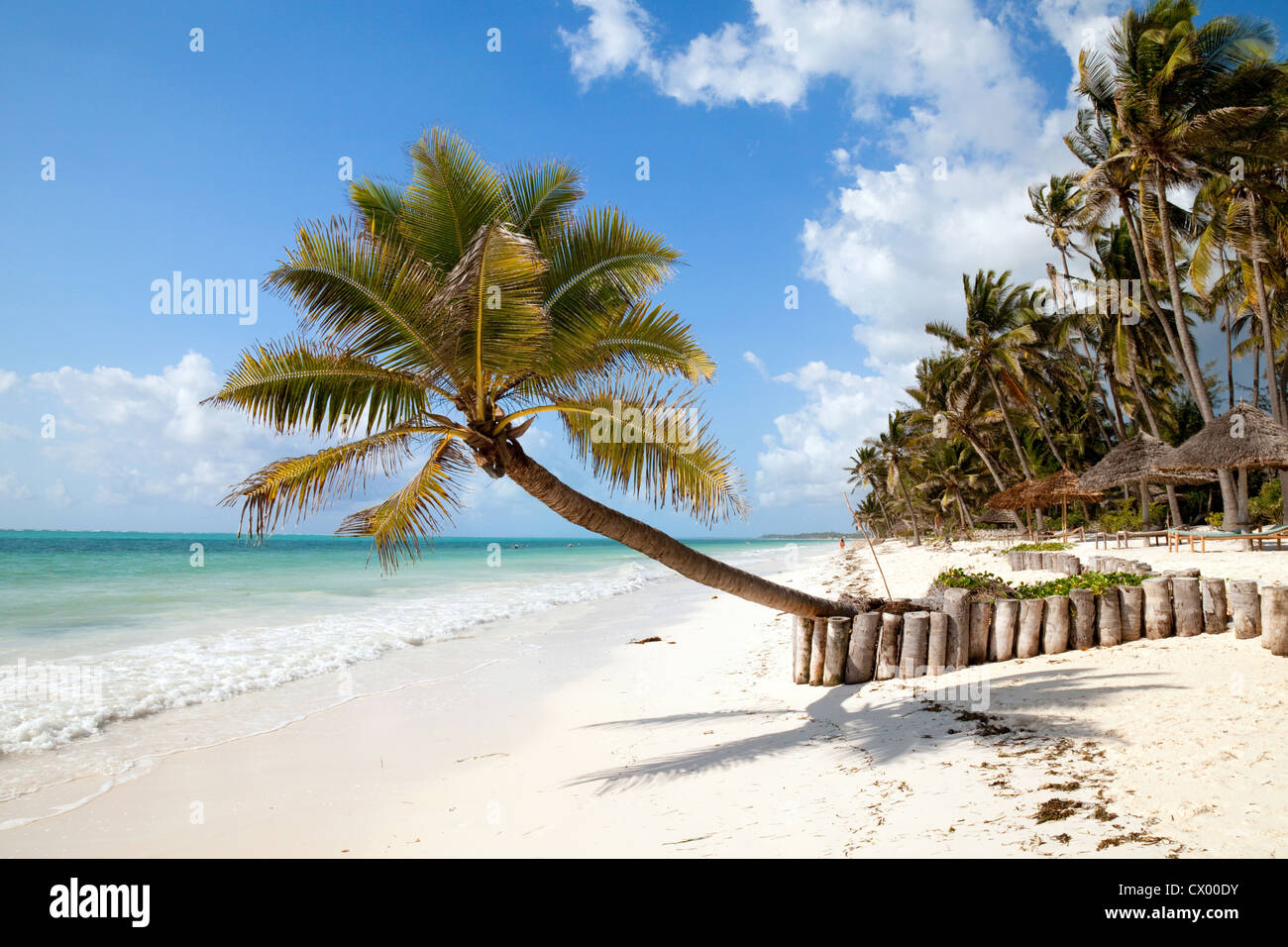 palm-tree-and-white-sands-bjewuu-beach-z