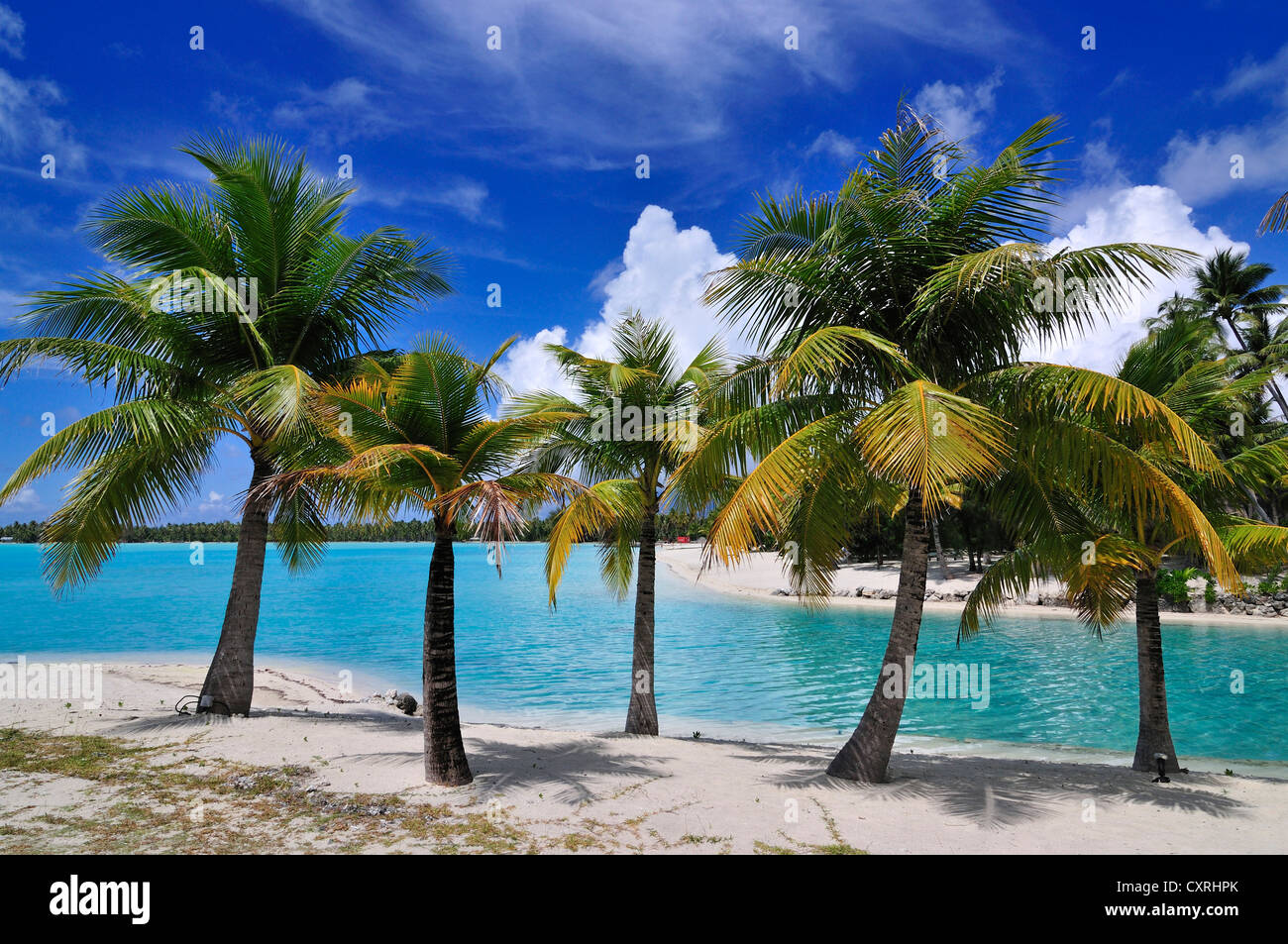 Palm trees at the beach st regis bora bora resort bora for What to buy in bora bora