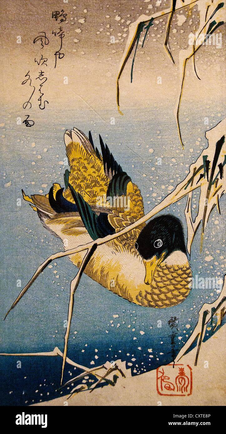 Mallard Duck and Snow-covered Reeds Utagawa Hiroshige Japanese 1797–1858)  Edo period 1832 Japan 38.1 x 17.5 cm Stock Photo