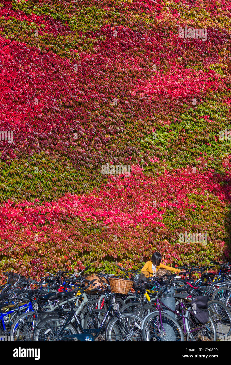 churchill-college-covered-in-red-ivy-on-