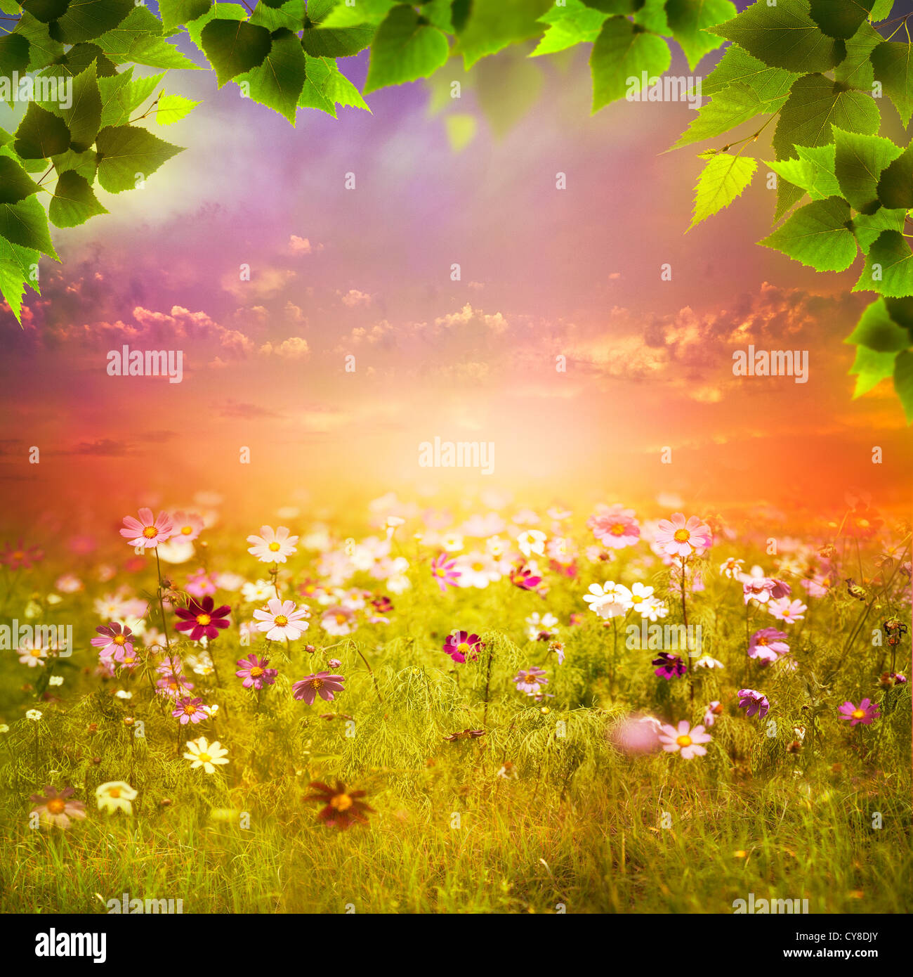 Mystical evening on the meadow. Abstract natural backgrounds for your design Stock Foto