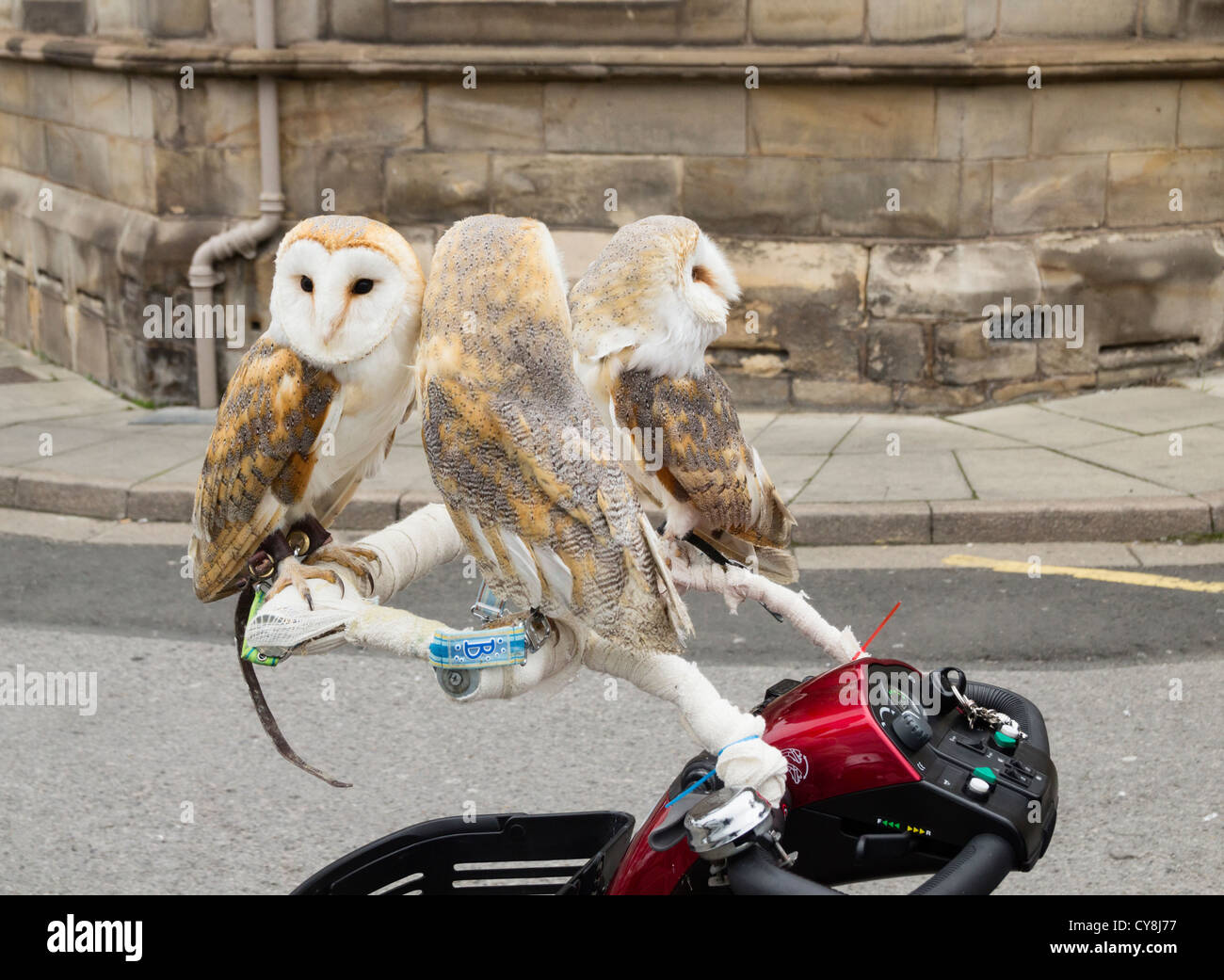 three pet barn owls on mobility scooter in middlesbrough. Black Bedroom Furniture Sets. Home Design Ideas
