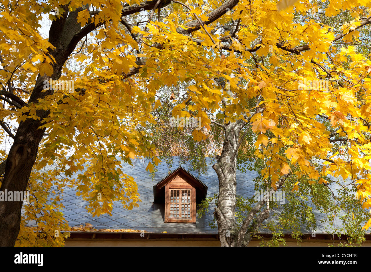 autumn-leaves-at-novodevichy-convent-moscow-CYCHTR.jpg