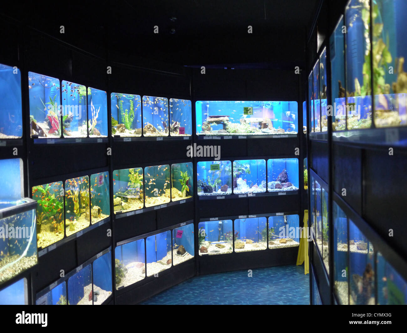 fish tanks pet store stock photo royalty free image 51475972 alamy. Black Bedroom Furniture Sets. Home Design Ideas