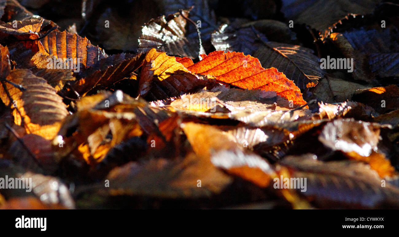 fallen-leaves-in-autumn-CYWKYX.jpg
