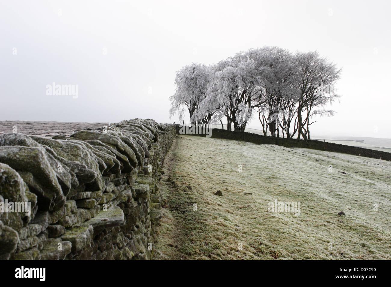 so-called-elephant-trees-in-winter-weard
