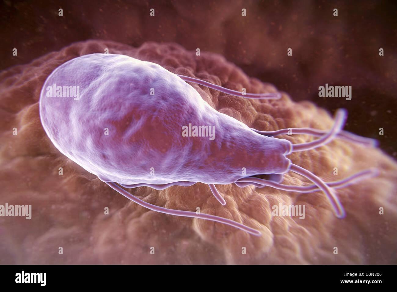 паразиты живущие в человеке