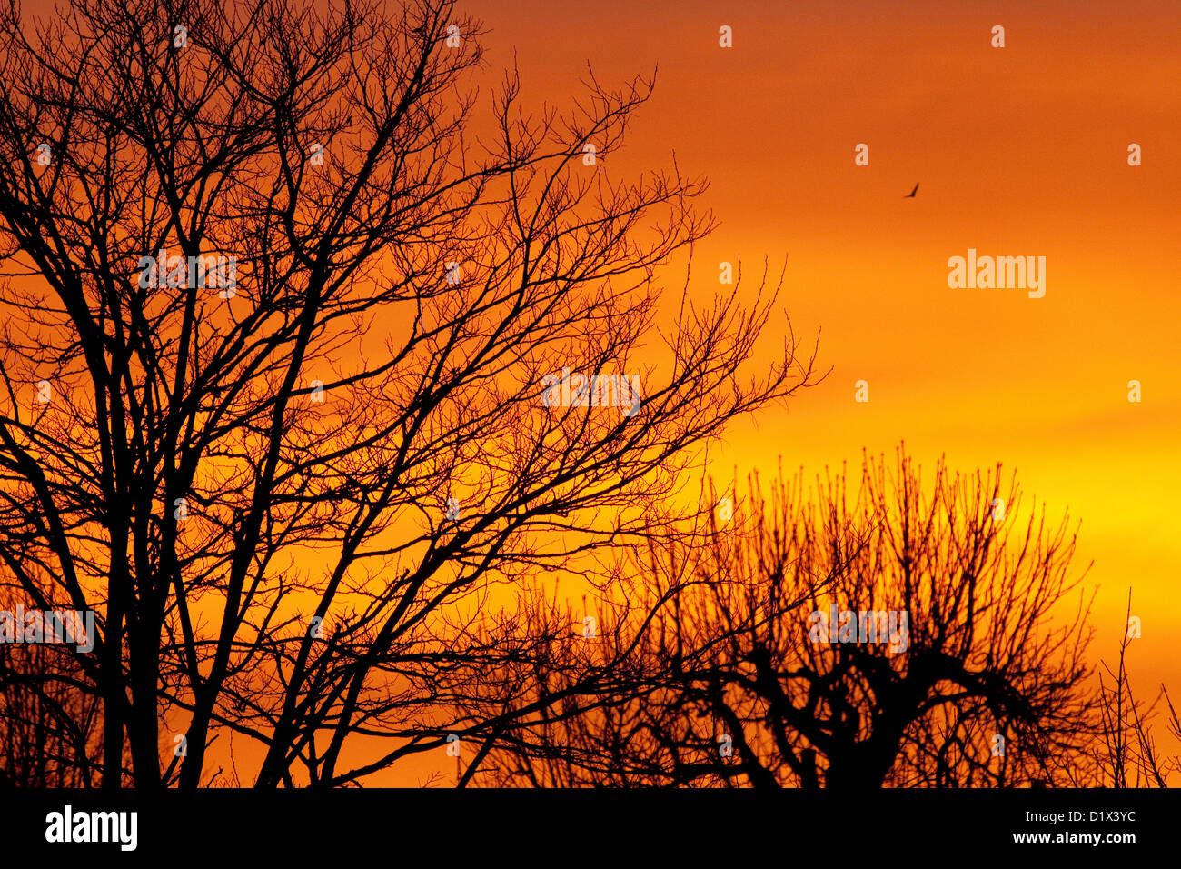 winter-sunrise-with-trees-red-sky-in-the