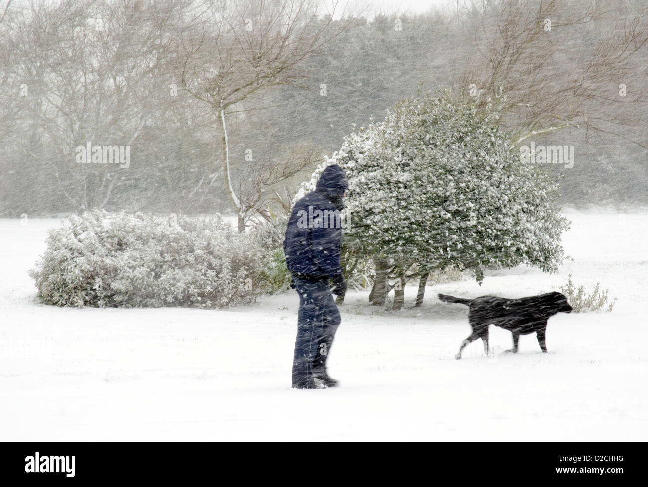 man-covered-in-snow-while-walking-a-dog-