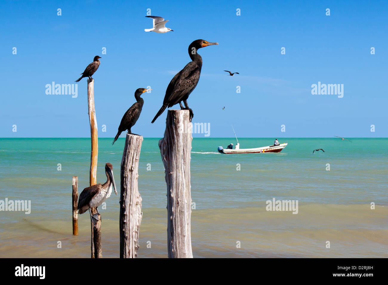 nautical-birds-perched-on-wooden-posts-isla-holbox-mexico-D2RJ8H.jpg