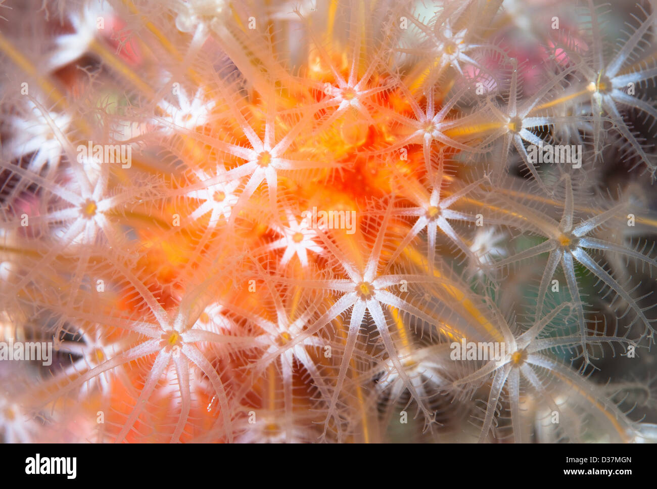 Close up of colorful underwater plant Stock Foto