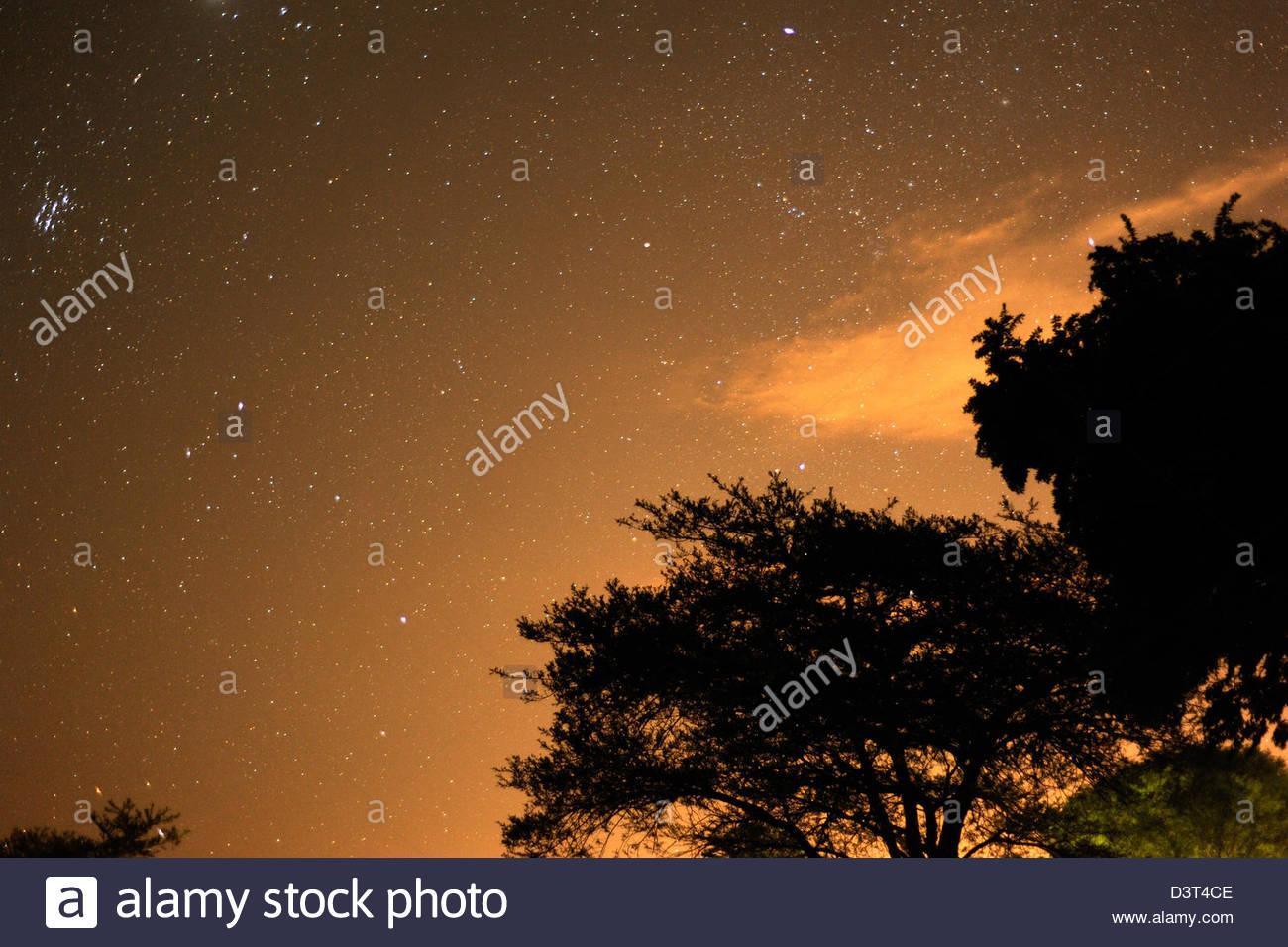 mlilwane-swaziland-night-sky-with-acacia