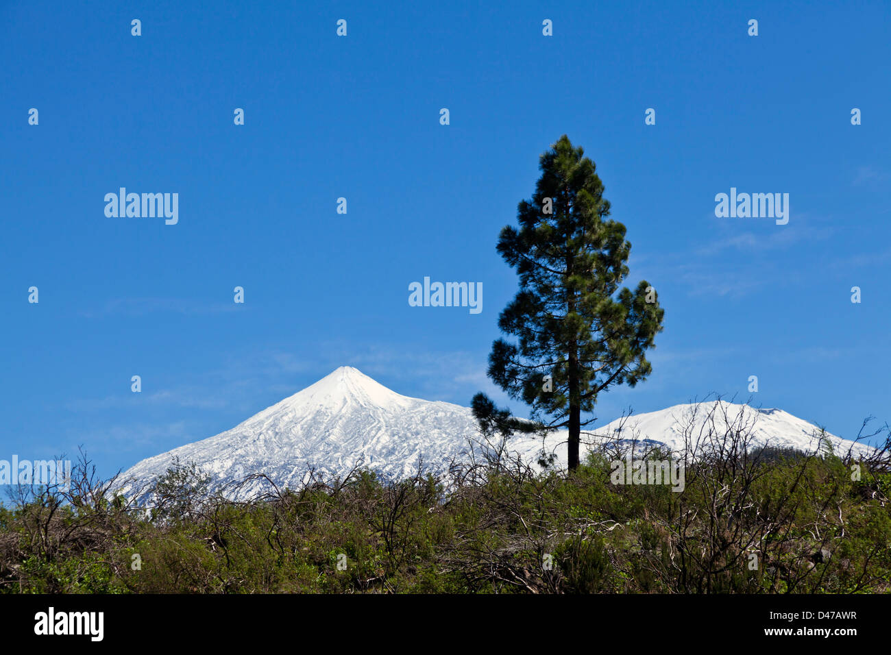 snow-covered-mount-teide-and-pinus-canar