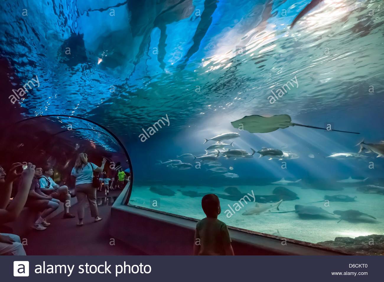 tunnel-through-the-open-ocean-aquarium-a