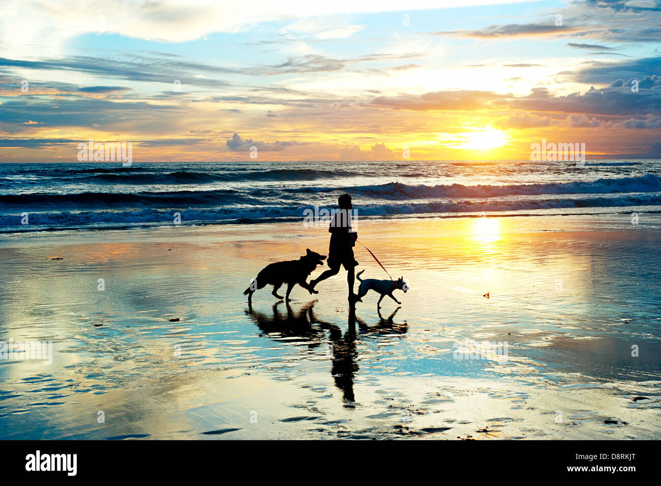 Man with a dogs running on the beach at sunset. Bali island, Indonesia Stock Foto