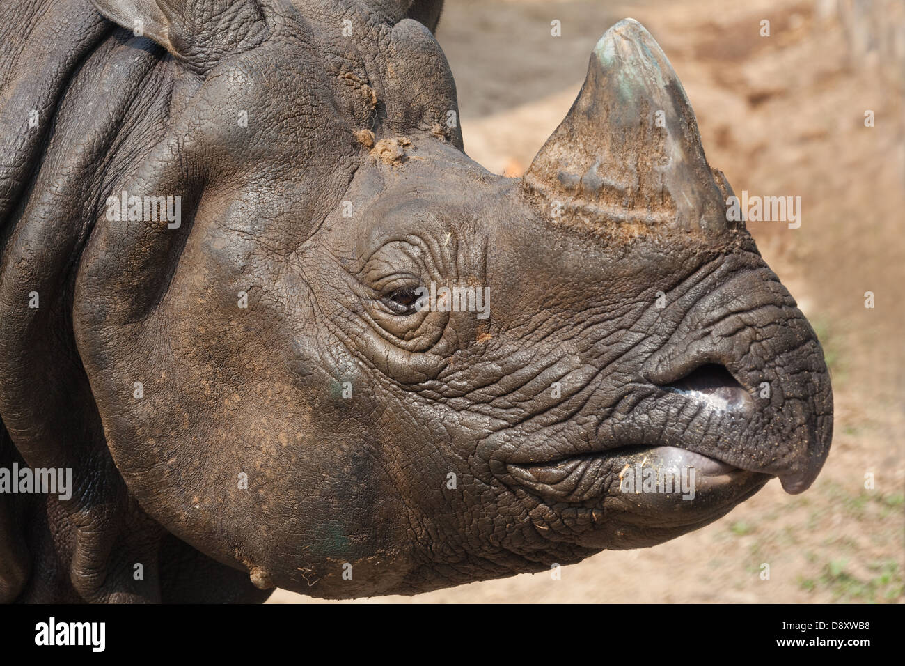 greater-one-horned-asian-or-indian-rhino