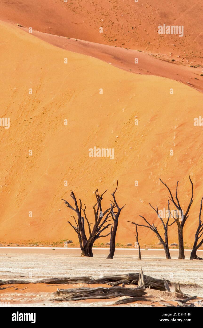 dead-camelthorn-trees-acacia-erioloba-in