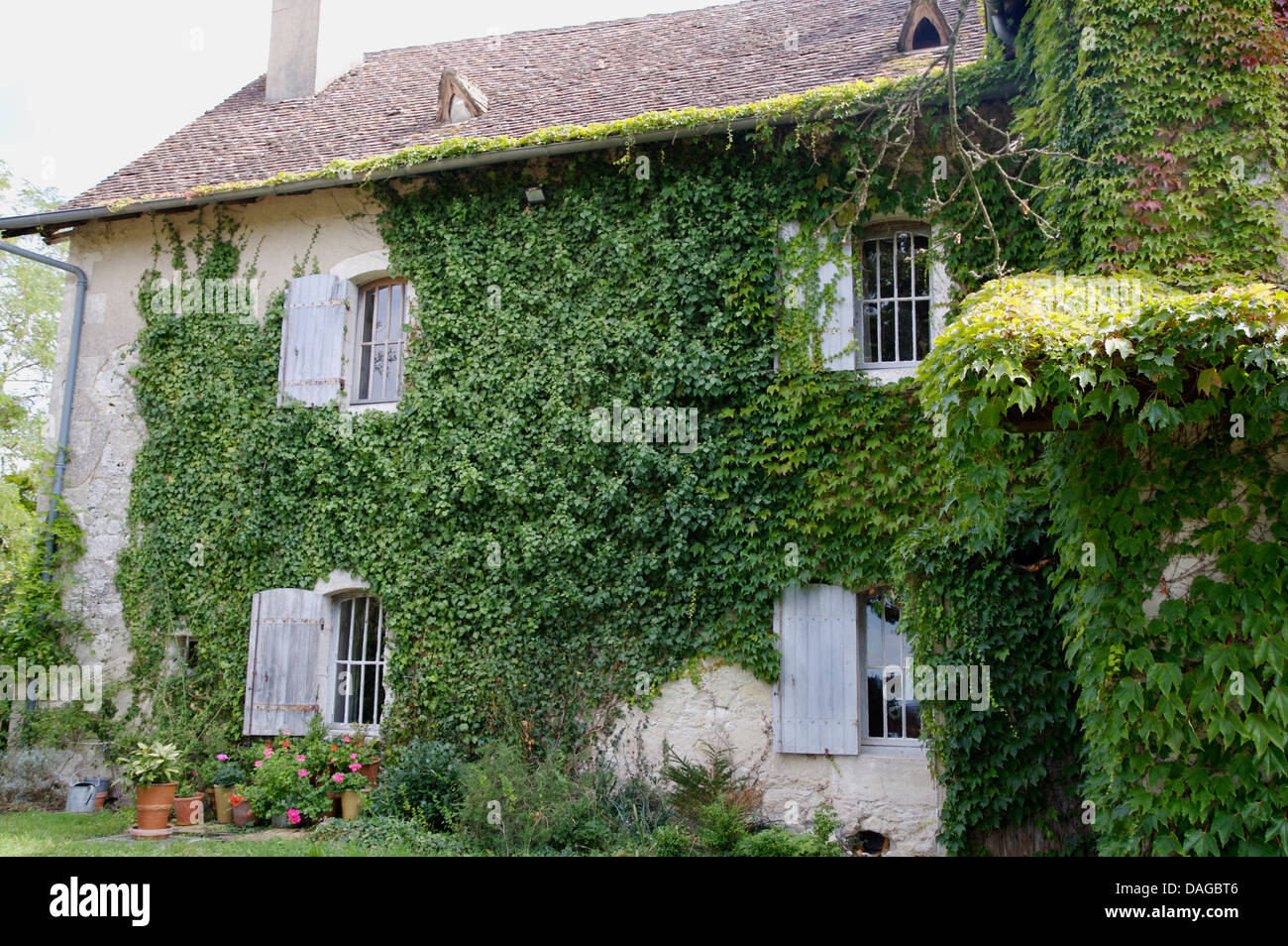Old french country house with ivy clad walls and windows with pale stock photo royalty free - The shutter clad house ...
